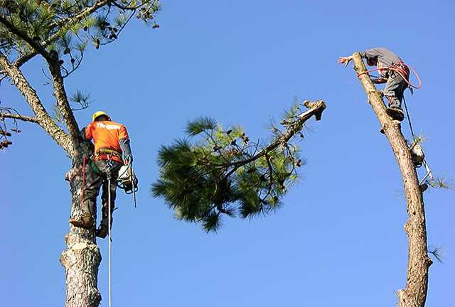 Tree Service – Types Available