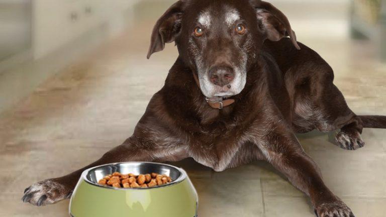 Benefits of CBD in Pets
