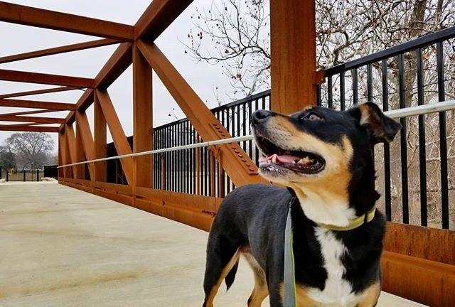 Dog Training – Building The Drive To Fetch